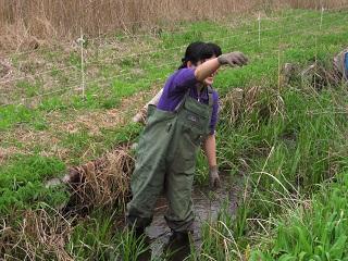 水路の除草2