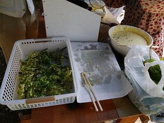 コシアブラの天ぷら準備