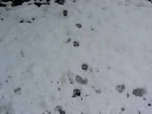 動物の足跡その1
