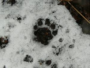 動物の足跡その2