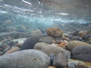 水中撮影3
