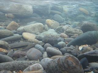 水中撮影4