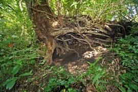 根の抜けた土
