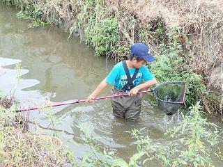 タモ網での魚の捕獲状況