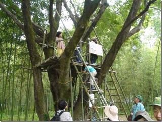 竹のジャングルジム1