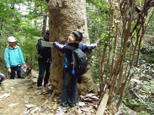 木の大きさを抱きついて測る