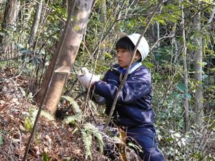 木を切る生徒