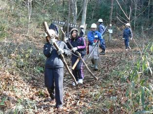 間伐した木の搬出