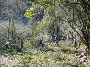 作業開始時の森の様子