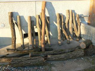菌打ち用の樹