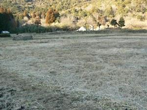耕されていない場所